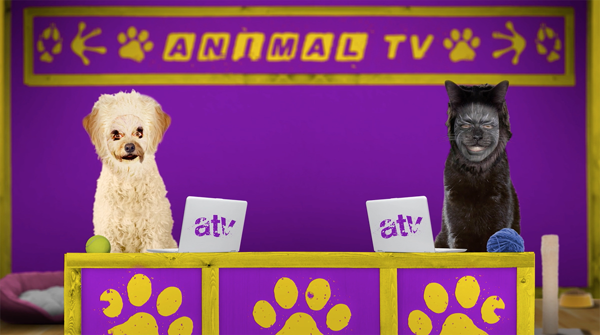 Animal TV – CBBC